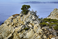 A Lonely Sentinel – Point Lobos State Natural Reserve, California