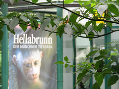 Hellabrunn
