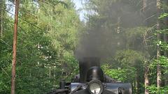 Dampf im Wald