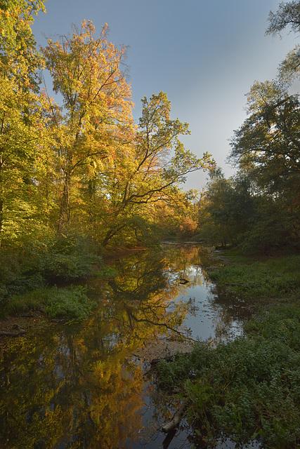 Forêt alluviale du Rhin Dalhunden