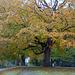 Fall Tree 2019