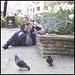 Pigeon spotting I