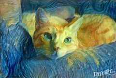 My Cat a la Vincent van Gogh