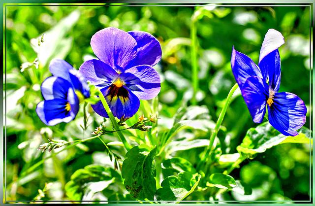 Summer meadow... ©UdoSm