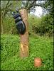 rare giant beetle