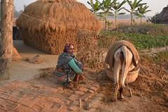 Village morning
