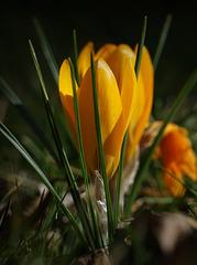 Was bereits im Februar im Garten blüht: