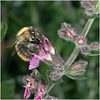 Busy, Busy, Bee