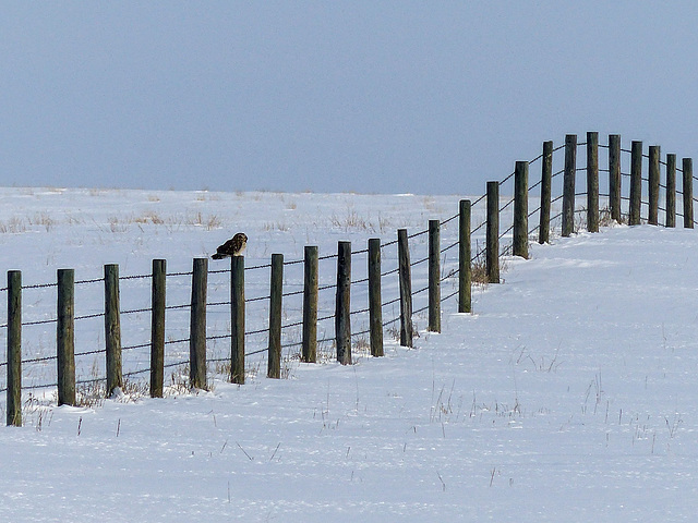Follow the fence line
