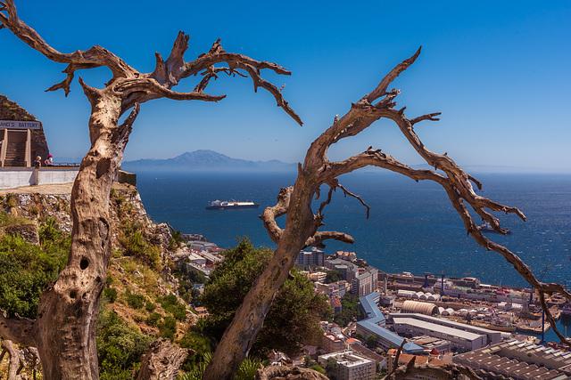 Gibraltar jenseits von Africa