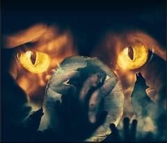 Il est des animaux que les ombres caressent, des chiens fauves, fougueux, fiers, inapprivoisés, de grands loups qui dans la nuit se dressent?