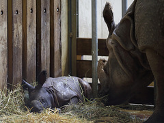 Baby schläft, Mama wacht (Wilhelma)