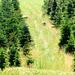 Between spruce