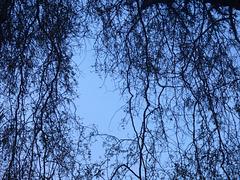 Un tejido de ramas invernales