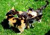 """Three little cats: everyone runs their own """"politics"""""""