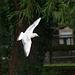Gull flight photo 3