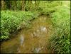 Tillingbourne in spring