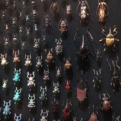 Beetles  army.