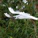 Gull flight photo 6