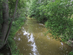 A creek or a small river, and adjacent plants. The name of the stream is Dead Creek.