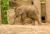 Baby elephant b6