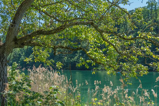 am Rhein bei Eglisau (© Buelipix)
