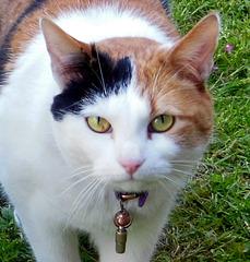 BEAUTIFUL CAT!!