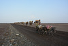 Ethiopia, Danakil Depression, Caravan for the Transportation of Salt Mined in the Karum Salt Marshes