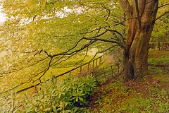 HFF Beneath the trees.