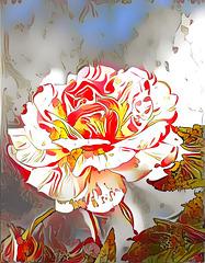 giocando con una rosa