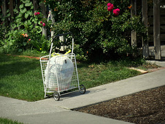Cart with roses