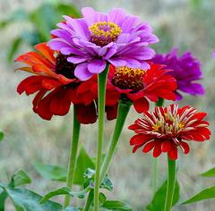 Bouquet fraicheur...