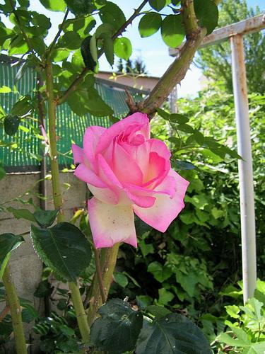 Au jardin de mon amie !
