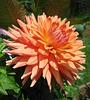 Elegance in Orange (Explored)