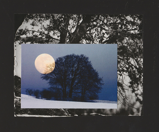 moon with treescape