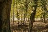 Woods Near Bowden Park