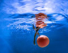 1 (48)..orange falling in blue water