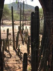 HFF mit diesem Stachel Drahtzaun