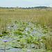 Uganda, The Wetlands of Mabamba