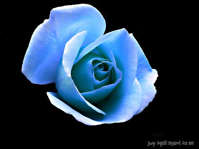 ❀Bright Blue Rose❀