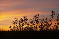Penedos sundown