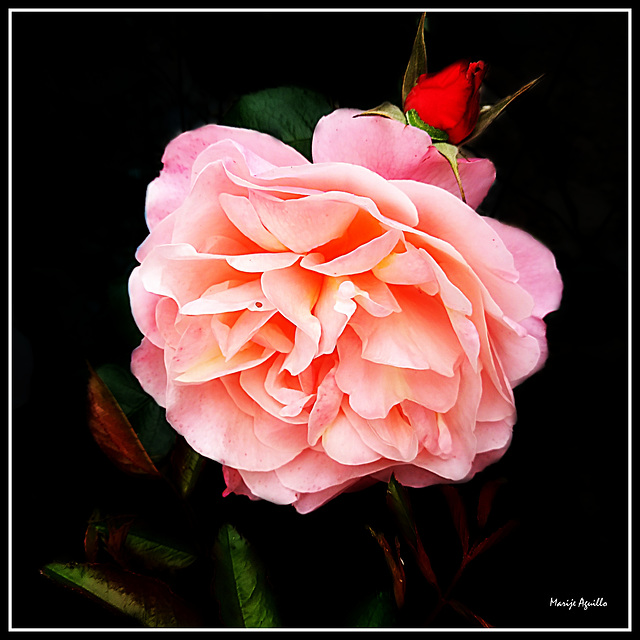 Rosa salmón.