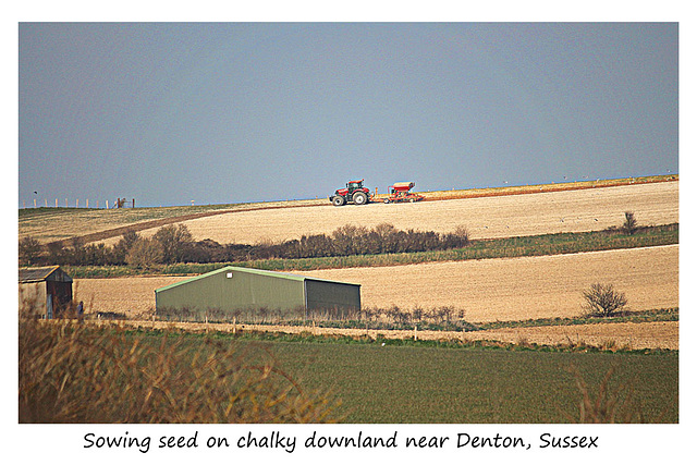 Sowing seed on chalky downland near Denton - Sussex - 17.3.2016