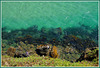 Grünes Wasser - grünes Ufer