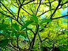 Victoria : il verde naturale domina sul market sottostante