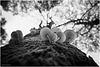 Mono Porcelain Mushrooms
