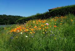 Fleurs simples pour le plaisir des yeux [ON EXPLORE]
