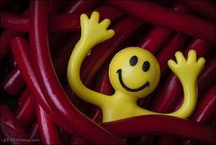 Twist Me Happy ...