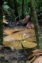 Fallen Palm Fronds