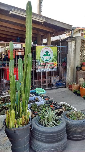 Cactus spot